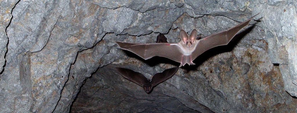 Best Way To Get Rid Of Bats Permanently And Humanely