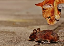 Mice Prevention Products That Actually Work
