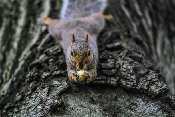 squirrel eating upside down