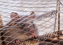 Best Live Mouse Trap