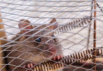 Live Humane Mouse Trap