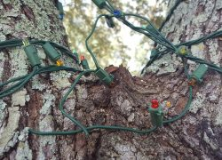 7 Ways to Stop Squirrels From Chewing Wires