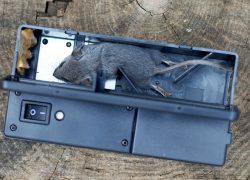 5 Best Electronic Rat Traps