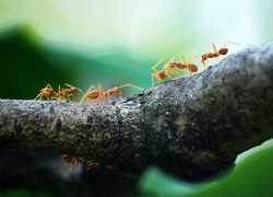 How to Get Rid of Ants:  3 Easy Steps To Success