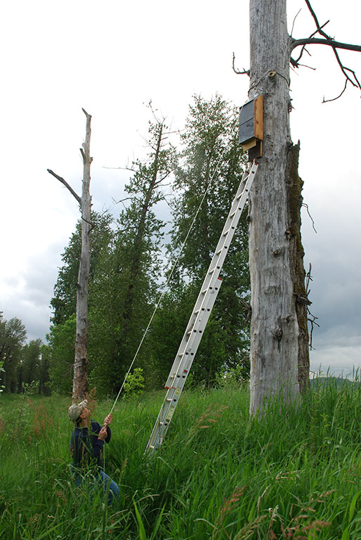 Mounting a Bat House On A Tree